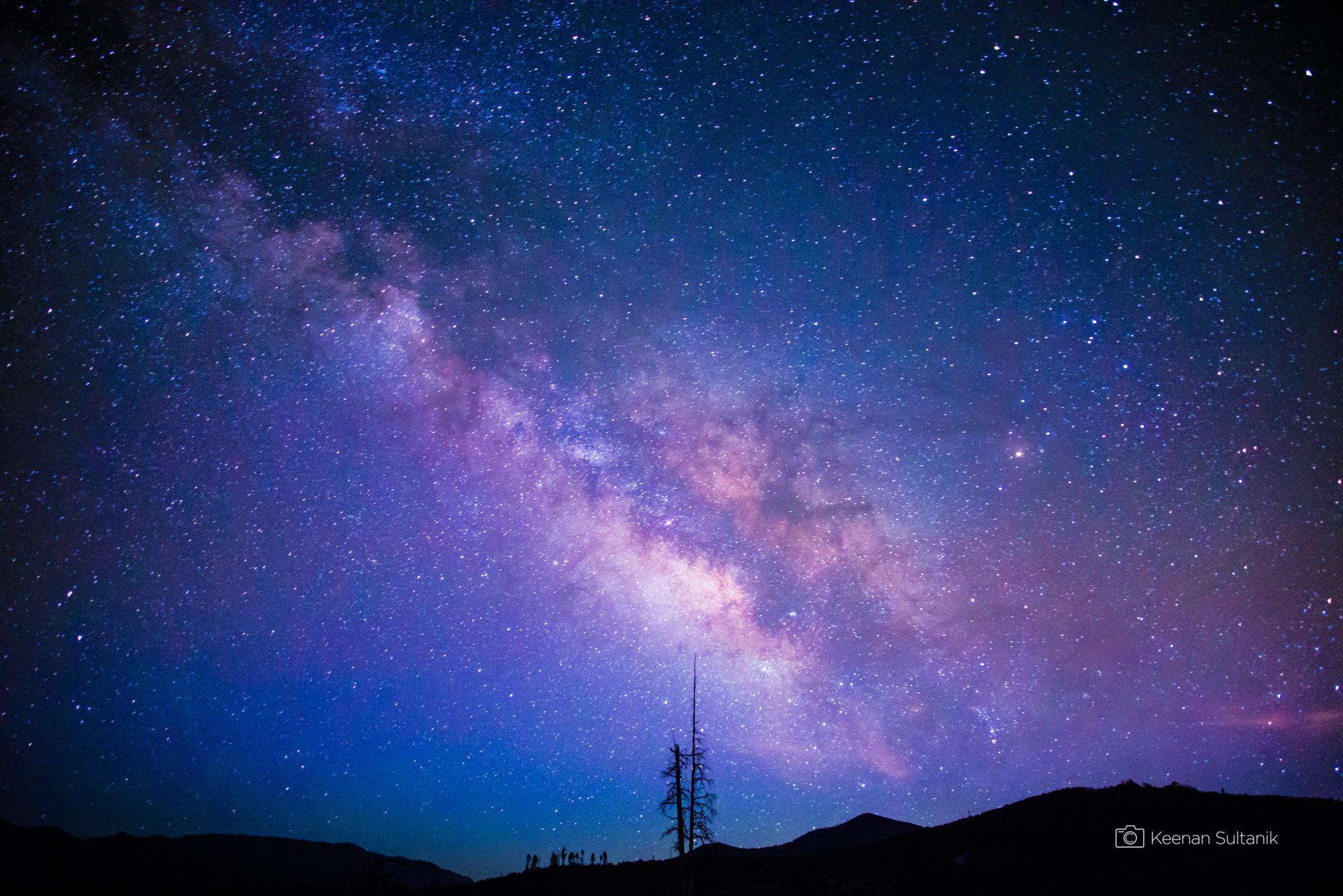 Tree Beneath the Milky Way